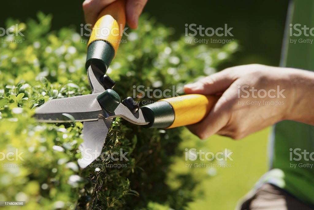 Man using hedge clippers stock photo