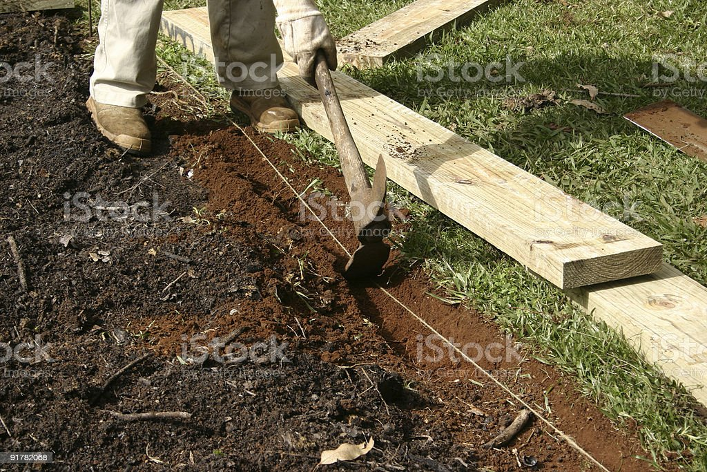 Man Using Metal Pick To Dig Garden Trench Stock Photo & More