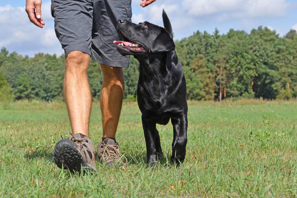 Man walk with dog in the park at sunny day. stock photo