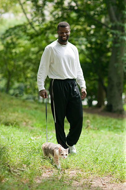 man walking a cat - cat leash stock photos and pictures