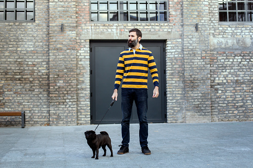 Man walking a pug dog