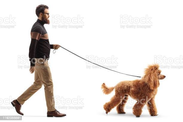 Man walking a red poodle dog picture id1192055591?b=1&k=6&m=1192055591&s=612x612&h=lpifpop5ihhospsldt5t8gztgllma0g9ouuzzee6gvu=