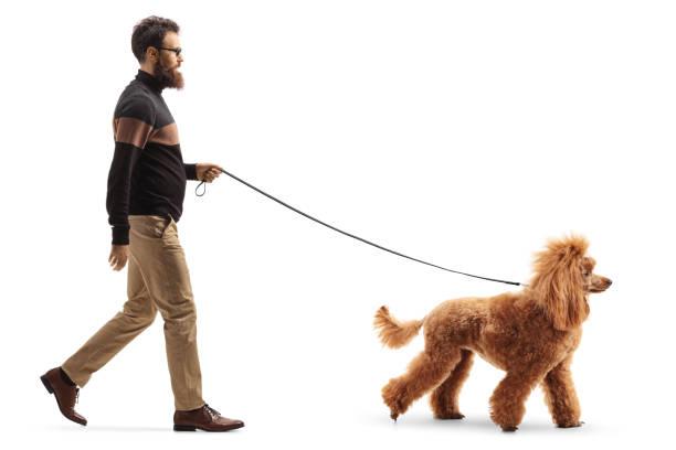 Man walking a red poodle dog picture id1192055591?b=1&k=6&m=1192055591&s=612x612&w=0&h=xdukdvpeejngnpeljoym04obtg6vrezcmi25bzfhsj4=