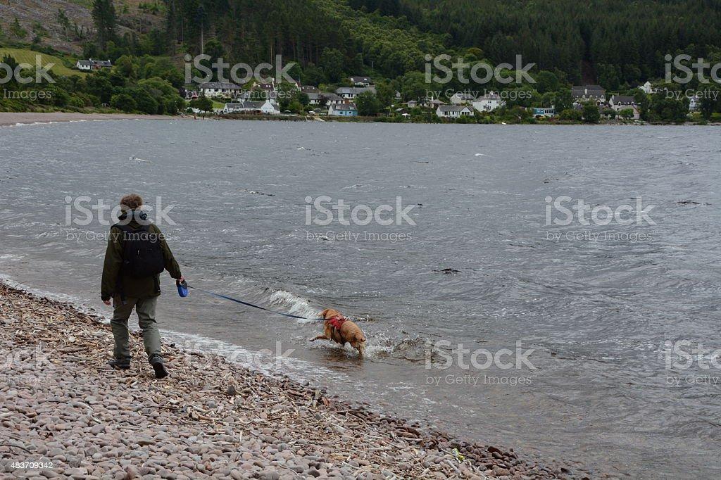 Man Walking a Surfing 3Legged Labrador stock photo