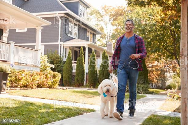 Man walking dog along suburban street picture id904482462?b=1&k=6&m=904482462&s=612x612&h=xwbn1ky2mng0kqzes8 gd5tzusf8lmf ylpy71rw160=