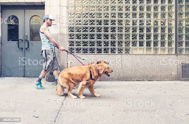 Man walking dog in city outdoors summer picture id480802886?b=1&k=6&m=480802886&s=612x612&h=aj0jjldffcd7mqpgsxbhvemywio15rpinbvjcuug94m=