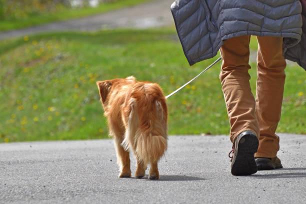 Man walking dog on a leash rockwood park picture id1050893178?b=1&k=6&m=1050893178&s=612x612&w=0&h=vg1dhg tx1yerbhs07durulx0pog5wxsuh1lky1qca8=