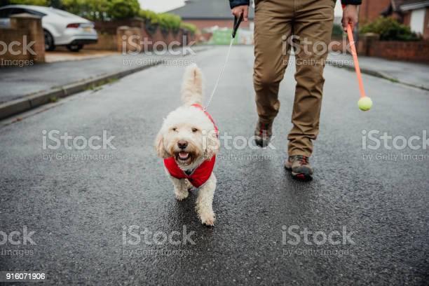 Man walking dog picture id916071906?b=1&k=6&m=916071906&s=612x612&h=wkpynqwdmzbnggscvdq0zwuyd0eo0ltmj4xkmtexajo=