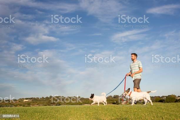 Man walking dogs at park picture id955984414?b=1&k=6&m=955984414&s=612x612&h=zyxr6qrza8ytipf2wqn ygxaaumwuanwlalinug1zz8=