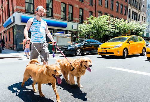 NYC Man Walking Dogs in City Outdoors Summer