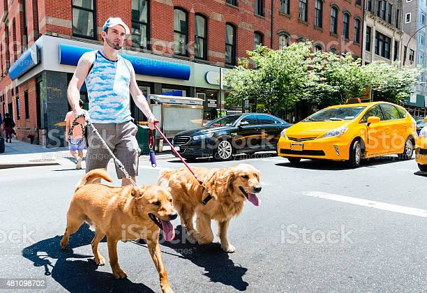 Man walking dogs in city outdoors summer picture id481098702?b=1&k=6&m=481098702&s=612x612&h=hzkkxory9hfibe0w3ypxs ycshixh31mpp dzon4lii=