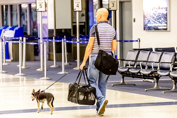 Man walking his dog in an airport picture id517697319?b=1&k=6&m=517697319&s=612x612&w=0&h=9xypv41jy rn0zmqhwa9n2ggv3sl4ysbrcrgzbpydn8=