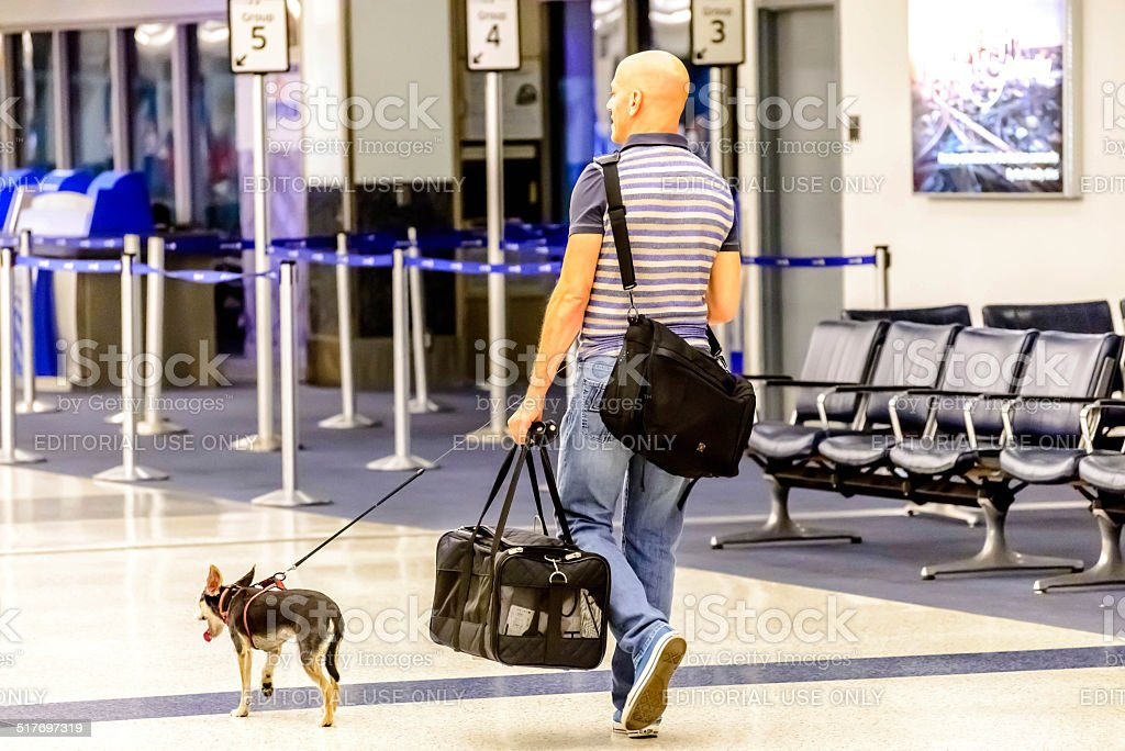 man walking his dog in an airport stock photo