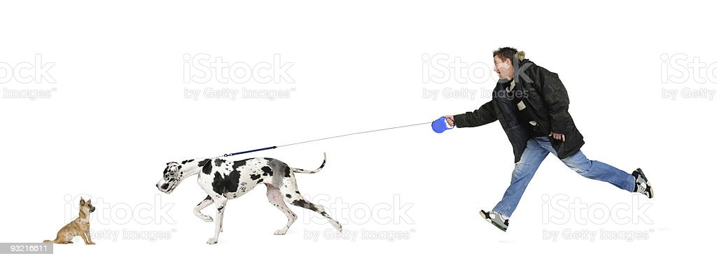 Man walking his dog (Great Dane 4 years) stock photo