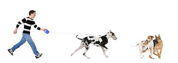 Man walking his dog picture id93216878?b=1&k=6&m=93216878&s=612x612&w=0&h=et9sm4qrnbqvruzqs0getrdurudsvtggvbdt8jknr0k=