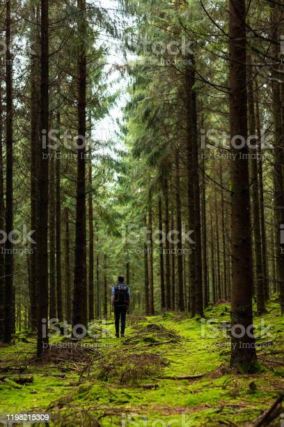 Photo of Man walking in forest