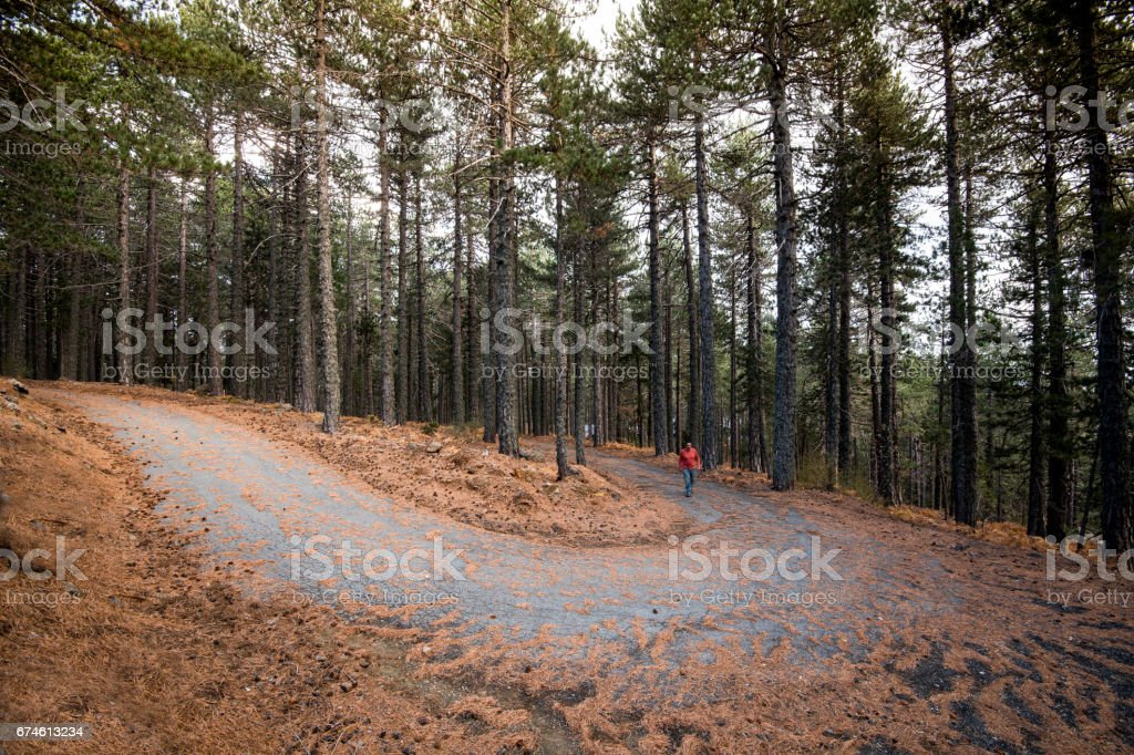 Man walking in the forest in Autumn stock photo