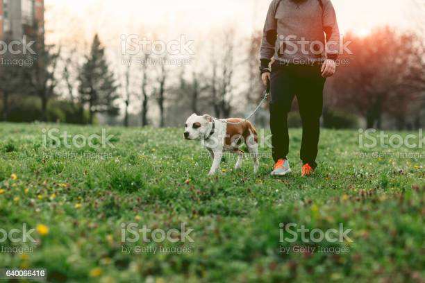 Man walking in the park with his dog picture id640066416?b=1&k=6&m=640066416&s=612x612&h=drw57qnohj1qo6uu fyi8sqw7zh55wyr5xzf18gobn8=