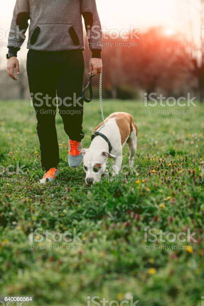 Man walking in the park with his dog picture id640066564?b=1&k=6&m=640066564&s=612x612&h=a7go7vya tivrpnlmzzn gvk4snv1azx857ixlcqjwk=
