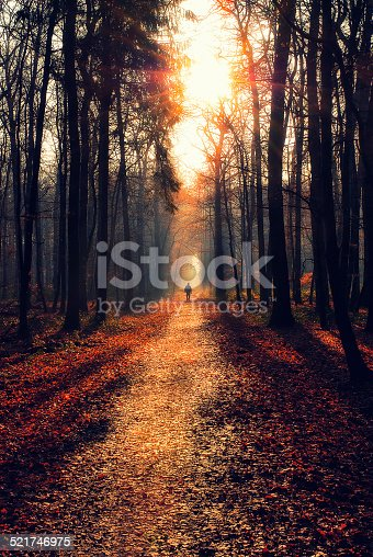 Man walking on a path in a strange dark forest,