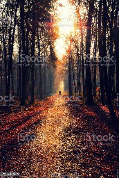 Photo of Man walking on a path