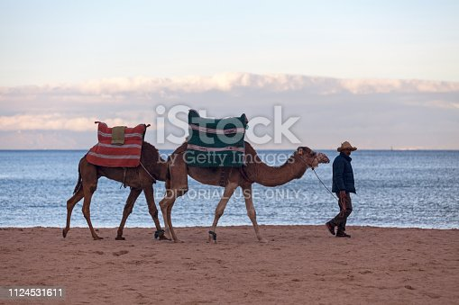 Tangier, Morocco - January 24 2018: Man walking on the beach with his two dromedaries.
