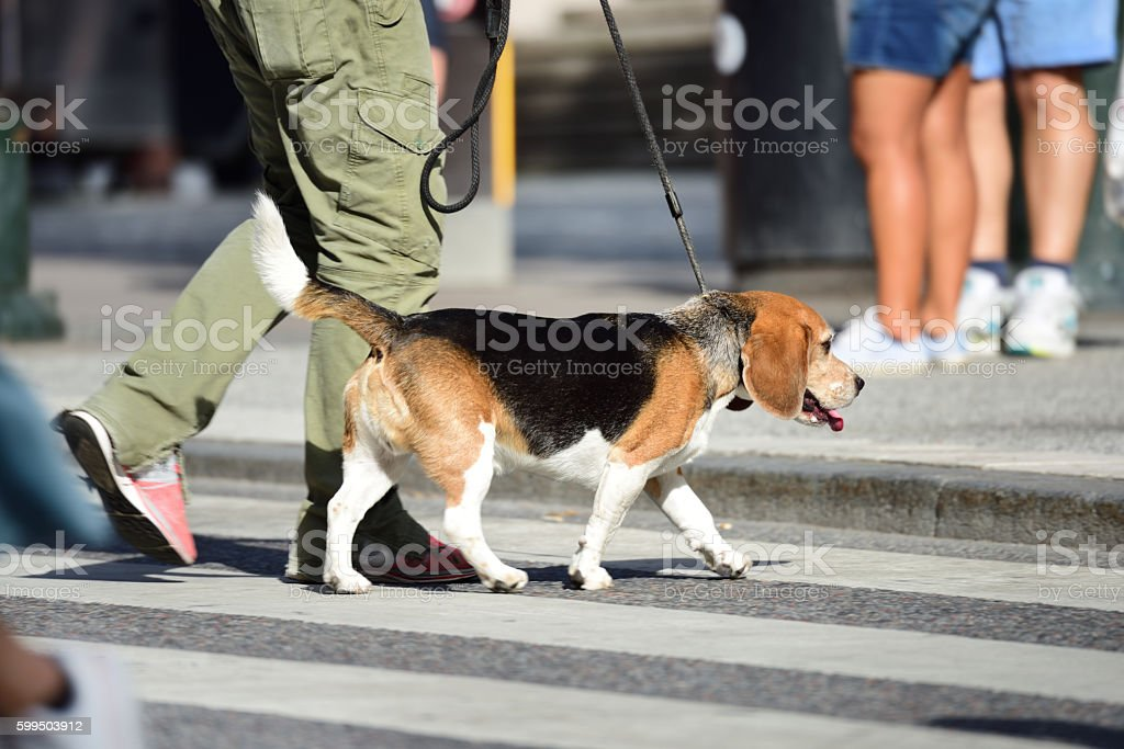 Man walking the dog in city