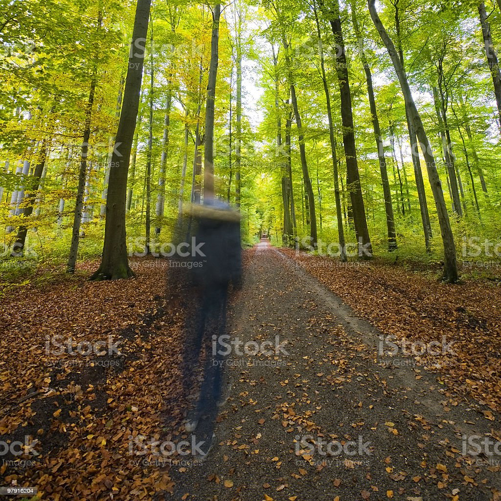 Man walking through the Forest royalty-free stock photo