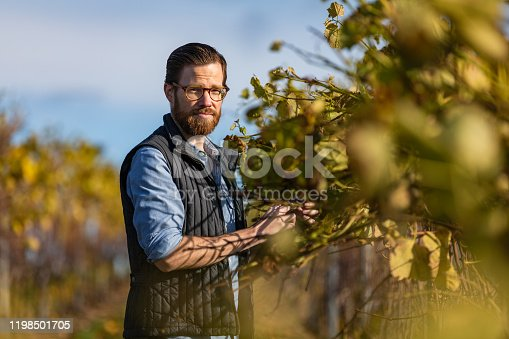 A caucasian man with a beard and glasses walking through a vineyard.