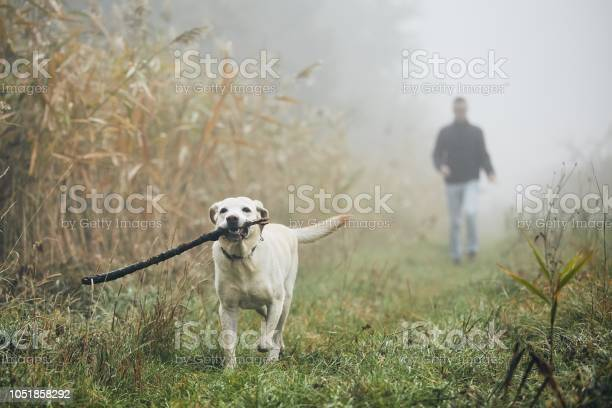 Man walking with dog in autumn fog picture id1051858292?b=1&k=6&m=1051858292&s=612x612&h=nbjxgimdtcu5sqpgrklewf7twhmbukdwsj3g6ds hvg=