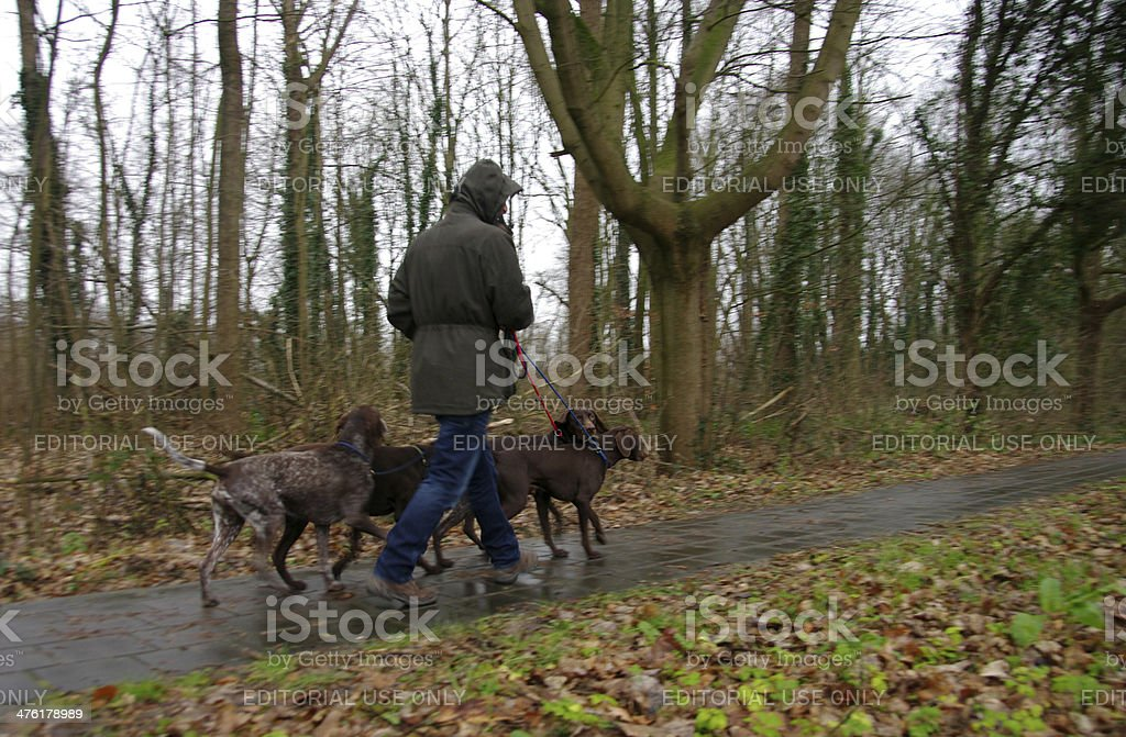 Man walking with his dogs royalty-free stock photo