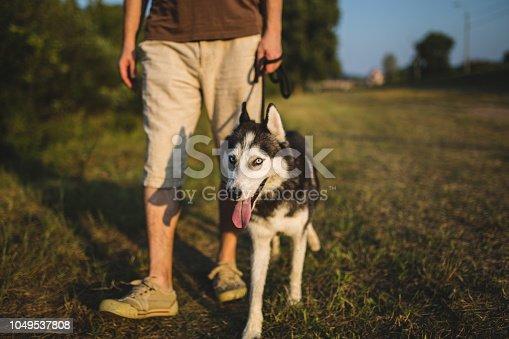 istock Man walking with siberian husky near river 1049537808