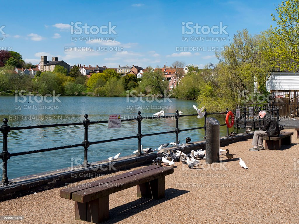 Man watching birds beside Diss Mere stock photo