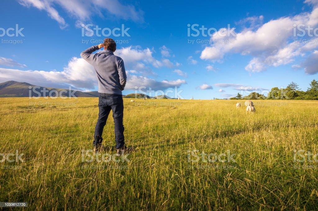 Man watching sheep graze on the lush hills of Keswick, England royalty-free stock photo