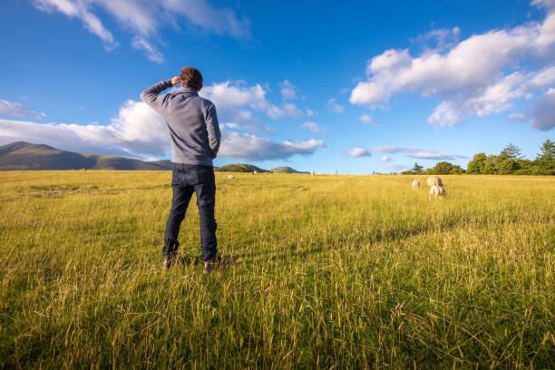 Man watching sheep graze on the lush hills of Keswick, England stock photo