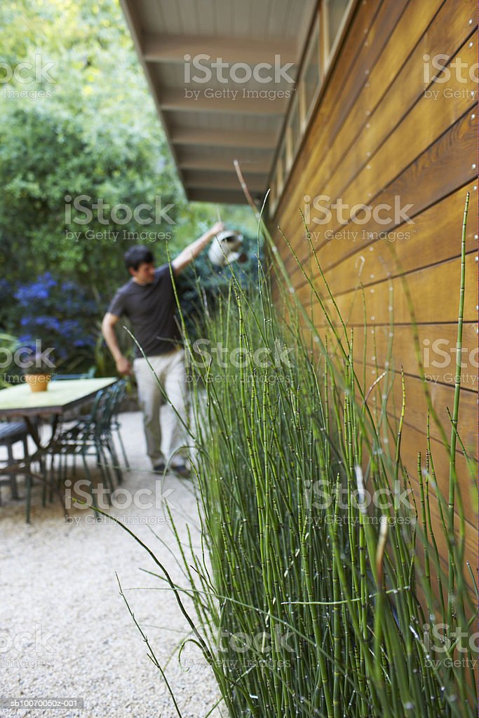 Man watering plants, focus on plants in foreground royalty free stockfoto