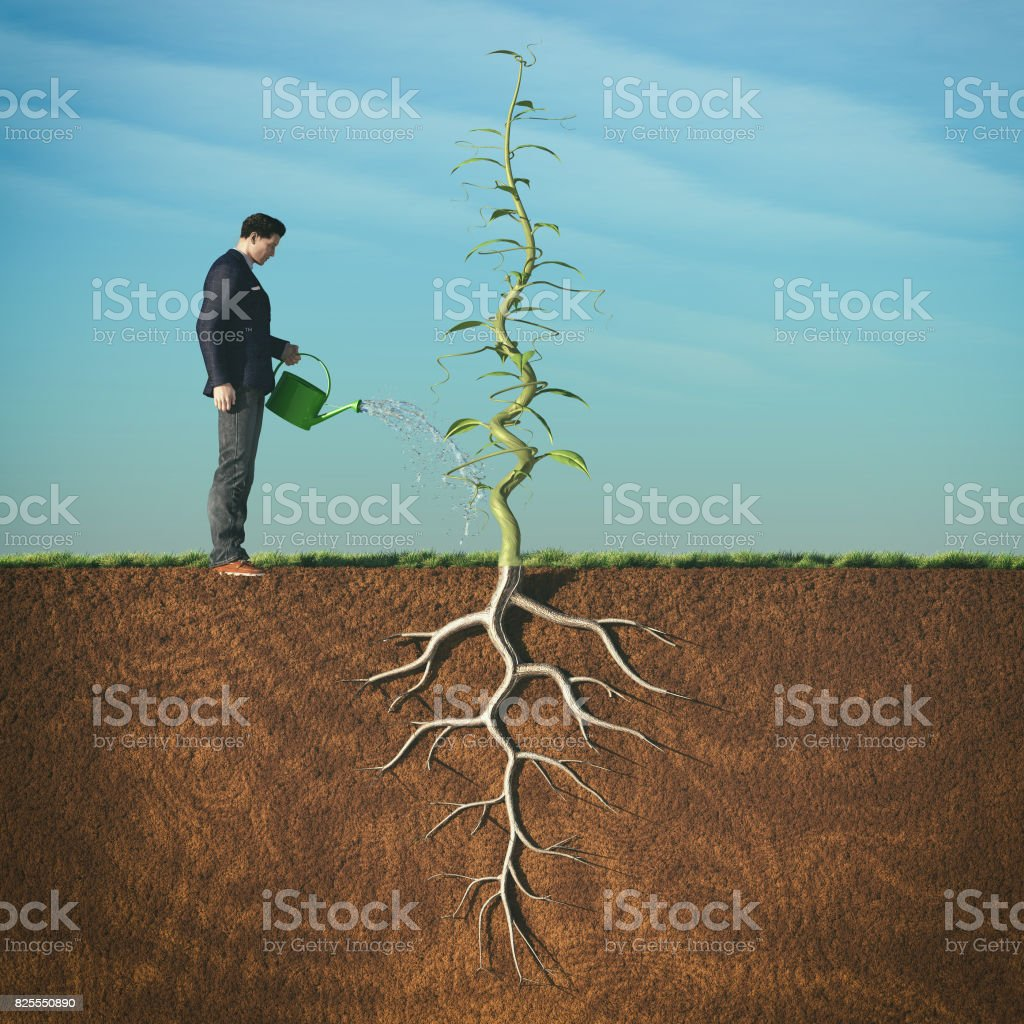 Man watering with sprinkler a beanstalk stock photo