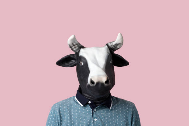 man wearing a cow mask on a pinkg background stock photo