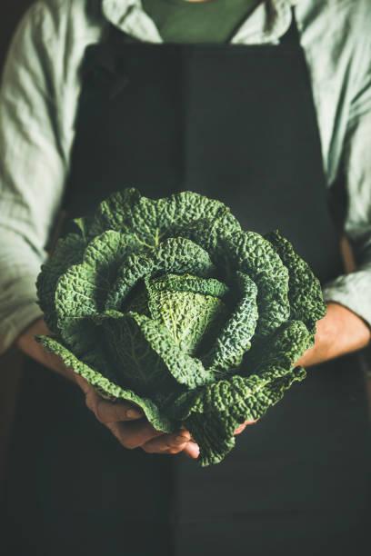 mann trägt schwarze schürze, frische grüne cabbagein in händen zu halten - hofladen stock-fotos und bilder