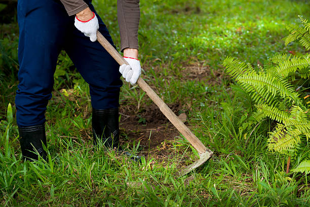 Man  weeding his garden with hoe. Man  weeding his garden with hoe.  Adult male digging weed  in his green grass lawn with sunlight background. garden hoe stock pictures, royalty-free photos & images