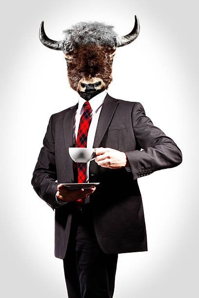 A man with a cow head drinking a hot drink  stock photo