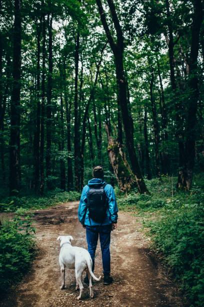 man med en hund i skogen - hund skog bildbanksfoton och bilder