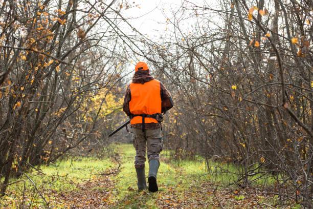 en man med pistol i händerna och en orange väst på en fasan jakt i ett skogsområde i molnigt väder. jägare med hundar på jakt efter spel. - rovdjur bildbanksfoton och bilder