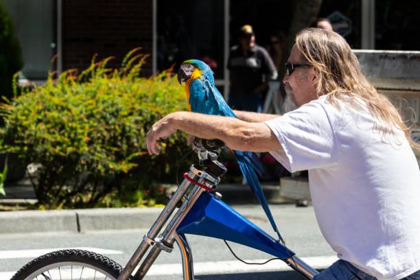 mann mit ara papagei auf dem lenker seines fahrrades - urbanara stock-fotos und bilder