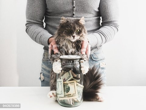 istock Man with a piggy bank and a cute cat 940929386