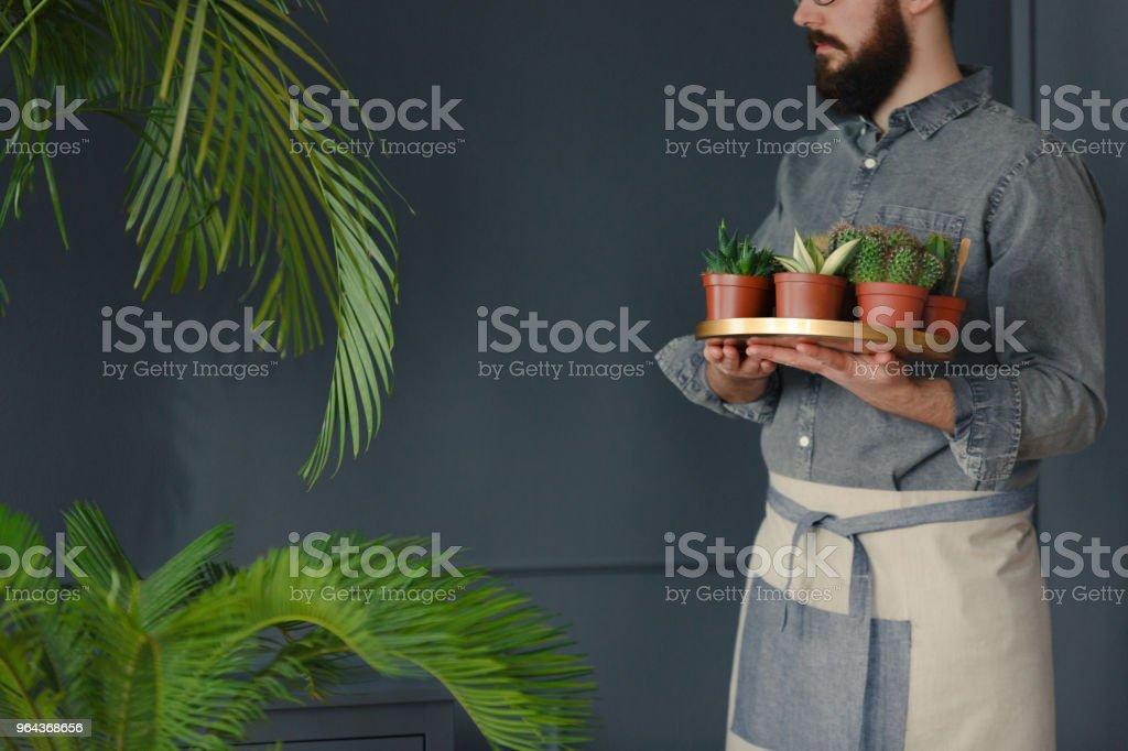 Homem com barba e no traje de trabalho segurando suculentas em laranjal cinza - Foto de stock de Adulto royalty-free