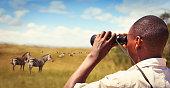 Park ranger with binoculars watching zebras in Akagera national park
