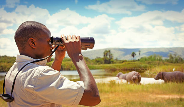 Man with binoculars watching wild animals Park ranger with binoculars watching hippos in the Akagera national park park ranger stock pictures, royalty-free photos & images