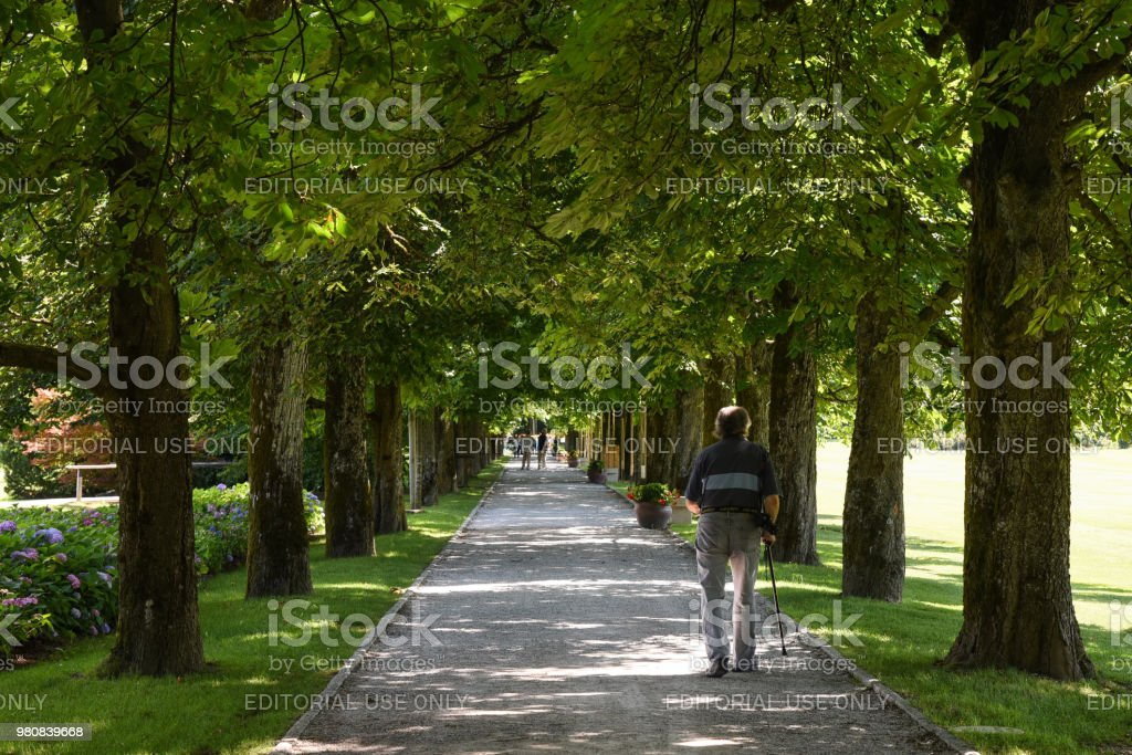 Man with Cane walking through tree lined path stock photo