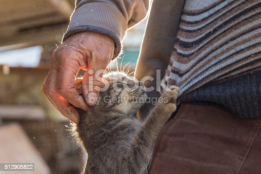 Cute cat hugging an old man in village outdoor. The man touching the kitty with his hand.  They are in a house yard at sunset. Closeup